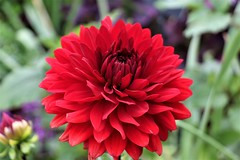 CX3A1595 (DaveH1970) Tags: plants summer june 21st 2019 missouri