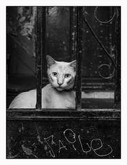 Les graffitis chat Suffit. (francis_bellin) Tags: olympus gato andalousie streetphoto street netb photoderue noiretblanc monochrome grilles chat ville rue blackandwhite bw 2019 séville espagne