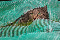 When a cat needs some peace and quiet (FocusPocus Photography) Tags: sethi katze kater cat versteckt hidden hiding gras grass stoff fabric tabby tier animal haustier pet