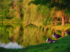 Mr & Mrs Geese in the park (boriches) Tags: geese park pointillism painterly