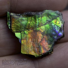Beautiful ammolite (zawaski -- Thank you for your visits & comments) Tags: alberta 4hire canada beauty naturallight lovwparis noflash serves revisit calgary love zawaski©2019 paris ambientlight lovepeace 2007 editing canonef50mmf25macro