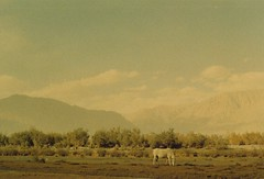 (rqlevy) Tags: 35mm film diskit nubravalley ladakh india landscape analog travel adventure explore mountains nature