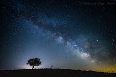 Contemplando la Via Lactea (Roberto_48) Tags: via lactea estrella estrellas nocturna noche arbol solitario