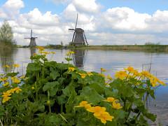 DSCN0941 (alainazer2) Tags: kinderdijk nederland paysbas holland hollande eau acqua water ciel cielo sky champs fields fiori fleurs flowers moulin mulino windmill