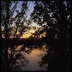 Sunset and trees (Jens Jacob - Hej!) Tags: twinlensrefleks fujirdpiii fuji slide mediumformat 6x6 tlr film rollei e6 v700 perfectionv700 zeiss epsonperfectionv700 mellemformat 120 rolleiflex28e