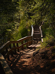 Gooseberry Trail (yarnim) Tags: gooseberryfalls gooseberryfallsstatepark statepark minnesota mn greatlakes trail hiking sony a7m3 a7iii ilce7m3 a7 sel24105g zoomlens zoom forest trees steps stairs colors nature captureonepro captureone