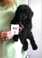 Irma Girl 2 pic 3 6-22