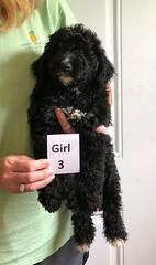 Irma Girl 3 6-22