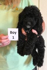 Irma Boy 1 6-22