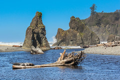 Ruby Beach (Oleg S .) Tags: rock usa beach tree nature water deadwood sea washingtonstate olympic travel