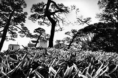 Hamarikyu Gardens, Tokyo (jev) Tags: 06000000 06007000 lovesunitedbnw artq beonebw blackandwhite bnwcaptures bnwfocuson bnwmagazine bnwmania bnwonly bnwframing bnwsplashdream everythingbnw hamarikyugardens igjapan igweekbnw japan japanesegarden jjblackwhite leicagram mafiabwlove monochrome mydailybnw passionforbnw tgifbnw tokyo tokyo2020 wideangle
