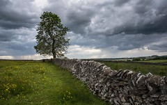 Another wall and tree shot (Phil-Gregory) Tags: cressbrookdale2019 nikon d7200 foolow tree wall stonewall scenicsnotjustlandscapes lines cloudscape clouds peakdistrict ngc nature