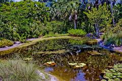 McKee Botanical Garden, 350 U.S. Highway 1, Vero Beach, Florida, USA / Area 18 acres (7.3 hectares) Architect: William Lyman Phillips / NRHP reference # 97001636 / Added to NRHP: January 7, 1998 (Photographer South Florida) Tags: mckeebotanicalgarden 350ushighway1verobeach florida usa area18acres73hectares williamlymanphillips nrhpreference97001636 addedtonrhpjanuary7 1998 waterfall longexposure rocks geology nature verobeach indianrivercounty city cityscape urban downtown skyline density centralbusinessdistrict building architecture commercialproperty cosmopolitan metro metropolitan metropolis sunshinestate realestate highrise condominium humidsubtropicalclimate treasurecoast verobeachpier atlanticocean jayceepark sand beach seaweed fishingpier historicdowntown puebloarcade streetphotography theatreplazahistoricdowntown statewidecommercialinsurance