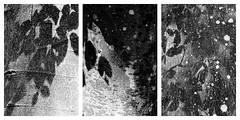 phellogen varieties (farbstich.) Tags: europeanbeech fagussylvatica rotbuche bark forest wald tree phellogen corkcambium shadows light rinde monochrome schwarzweis