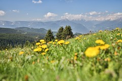 Dandelion Mountains (twomphotos) Tags: italy south tyrol südtirol mountain lake berge see schnee wasser wiese nature natur scenic water waser