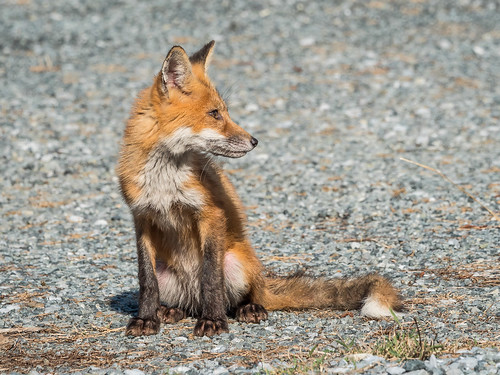 Fox Kids image