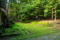 DILO - Summer Solstice June 21 2019 (14) (tommaync) Tags: dilojun2019 june 2019 june212019 nikon d7500 northcarolina nc summer summersolstice solstice chathamcounty chatham home yard grass trees