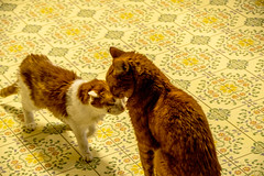 DILO - Summer Solstice June 21 2019 (31) (tommaync) Tags: dilojun2019 june 2019 june212019 nikon d7500 northcarolina nc summer summersolstice solstice chathamcounty chatham home pets animals cats floor spirit max