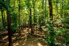 DILO - Summer Solstice June 21 2019 (25) (tommaync) Tags: dilojun2019 june 2019 june212019 nikon d7500 northcarolina nc summer summersolstice solstice chathamcounty chatham home nature trees backyard shadows sunshine