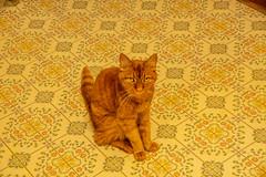 DILO - Summer Solstice June 21 2019 (32) (tommaync) Tags: dilojun2019 june 2019 june212019 nikon d7500 northcarolina nc summer summersolstice solstice chathamcounty chatham home pets animals cats floor max
