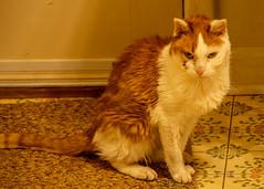 DILO - Summer Solstice June 21 2019 (30) (tommaync) Tags: dilojun2019 june 2019 june212019 nikon d7500 northcarolina nc summer summersolstice solstice chathamcounty chatham home pets animals cats floor spirit