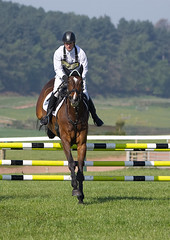 Photo of Show Jumper