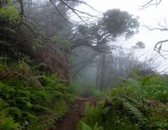 Maderia (faltimiras) Tags: madeira portugal trekking hiking funchal ultratrail ruivo porto moniz coast costa ocean cliff nature travel travesia