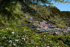 Porto Moniz (faltimiras) Tags: madeira portugal trekking hiking funchal ultratrail ruivo porto moniz coast costa ocean cliff nature travel travesia