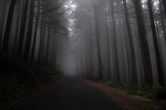 Boira (faltimiras) Tags: madeira portugal trekking hiking funchal ultratrail ruivo porto moniz coast costa ocean cliff nature travel travesia