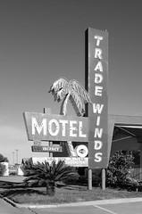 Tradewinds Motel (dangr.dave) Tags: grandprairie tx texas downtown historic architecture neon neonsign tradewindsmotel palmtree