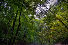 Friends Are All Amongst in in the Trees of the Forest (Mammoth Cave National Park) (thor_mark ) Tags: appalachianmountains appalachianplateaus azimuth249 capturenx2edited centralcumberlandplateau colorefexpro cumberlandplateau day5 heritagetrail internationalbiospherereserve landscape lookingwest mammothcavenationalpark nature nikond800e outside overcast project365 travel trees triptogatewaymammothcuyahoganationalparks walkway worldheritagesite kentucky unitedstates