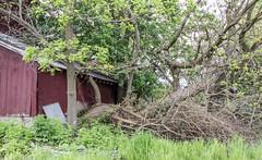 Foundation Disturbance (marylea) Tags: may26 2019 spring fourmilelake dextertownship washtenawcounty michigan redbarn farm barn rural ruraldecay