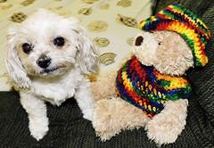 Poor Little Bella Went Through An Ordeal Yesterday (marilyntunaitis) Tags: dog pet bella stuffed animalplushteddy bearvet visit