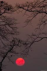 IMG_9751ri (StK-WI) Tags: asien asia assam bunt canon camera colourful colour colorful chariali color dslr dorf eos foto flickr farbig fluss flus river brahmaputra garamur garmur holiday holidays urlaub vacation incredibleindia incredible indien insel india island kolle kamera kamalabari lens landscape landschaft majuli nature natur objektiv photo stephankolle stkwi stephan 70300mm 2019 northeastindia northeast sevensisters seven sisters sun sonne sonnig sunny sonnenuntergang sunset himmel sky 60d apsc