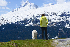 Sind sie noch da? (balu51) Tags: wanderung mittag pause alp aussicht landschaft berge schnee frühling sonnig föhnsturm windig hiking hikingwithdogs hiker dog white landscape mountains snow spring noon windy sunny graubünden surselva mai 2019 copyrightbybalu51