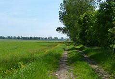 On our way to the Archemerberg (joeke pieters) Tags: 1470729 panasonicdmcfz150 dalfsen salland overijssel nederland netherlands holland wandelsporendalfsenommen2 landschap landscape landschaft paysage