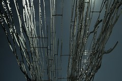 mind's vine soaring (gil walker) Tags: sculpture mindsvine marcocianfanelli tokara tokarawinery stellenbosch