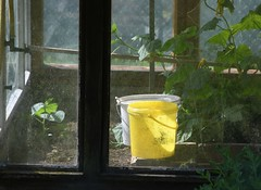 Green-house (Gerlinde Hofmann) Tags: germany thuringia village bürden greenhouse bucket yellow zucchini vegetable