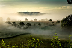 Enchanted morning (Rita Eberle-Wessner) Tags: landscape landschaft nebel fog bäume trees meadow gras grass hügel hills feld field getreide landsirtschaft agriculture obstbäume wiese streuobstwiese odenwald
