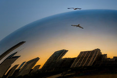 ChicaGull Flyover (Carl's Captures) Tags: sunset evening goldenhour millenniumpark thebean cloudgate reflections skyline distortion architecture buildings highrises skyscrapers gull seagull flight bird freedom wings horizon may spring chicagoillinois cityofchicago downtown cookcounty urban cityscape thewindycity chitown theloop sky mirrored sphere globe nikond7500 sigma18300 photoshopbyfehlfarben thanksbinexo