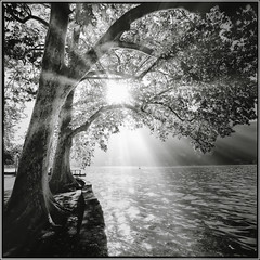 Light in the day for all (J.Vergès Photography) Tags: hasselblad 500cm distagon bw monochrom lake trees france annecy water garden film ilford sunray lac imperial shadows sunbeams analogue