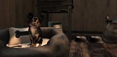 Burrow Coffee Gus (Miru in SL) Tags: secondlife sl coffee shop burrow dog doggo animal pet