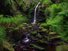 Paradise In Green (ttarpd) Tags: hindhope linn waterfall river stream blakehope burn magical enchanting dell blakehopeburnhaugh kielder forest drive northumberland north east england uk landscape gb britain greatbritain tree trees green moss mossy