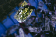 Nature Abstraction (youdoph) Tags: tree mirror green reflection abstract nature flora