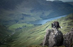 25/52 The Land of Paddy (JJFET) Tags: 25 52 weeks for dogs paddy border collie