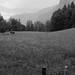Alpine Meadow at Trümmelbach