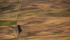 DSC_3339 OPEN RANGE (antelope reflection) Tags: washington spring farmland hills palouse