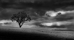 Lone tree bw (paullangton) Tags: tree bw mono clouds field nature monochrome landscape hertfordshire canon light shade weather storm blackandwhite outside counytrside lonetree