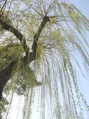 Am heilgen Sabbath unterlass (amras_de) Tags: baum træ stablo boom árbol drvo arbre strom tree arbo puu zuhaitz crann fa arbore tré albero arbor medis koks tre drzewo árvore àrvulu