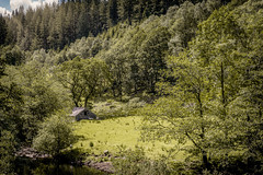 Sheep pasture, bank of Afon Eden (Niaic) Tags: afoneden river riverbank wales forest park countryside rural woods trees snowdonia landscape sheep pasture paddock sun rays structure stone house shelter summer scenic zeissloxia250 coedybrenin